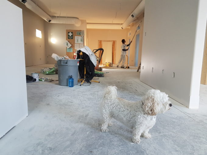 white dog standing with its owner in the living room renovating