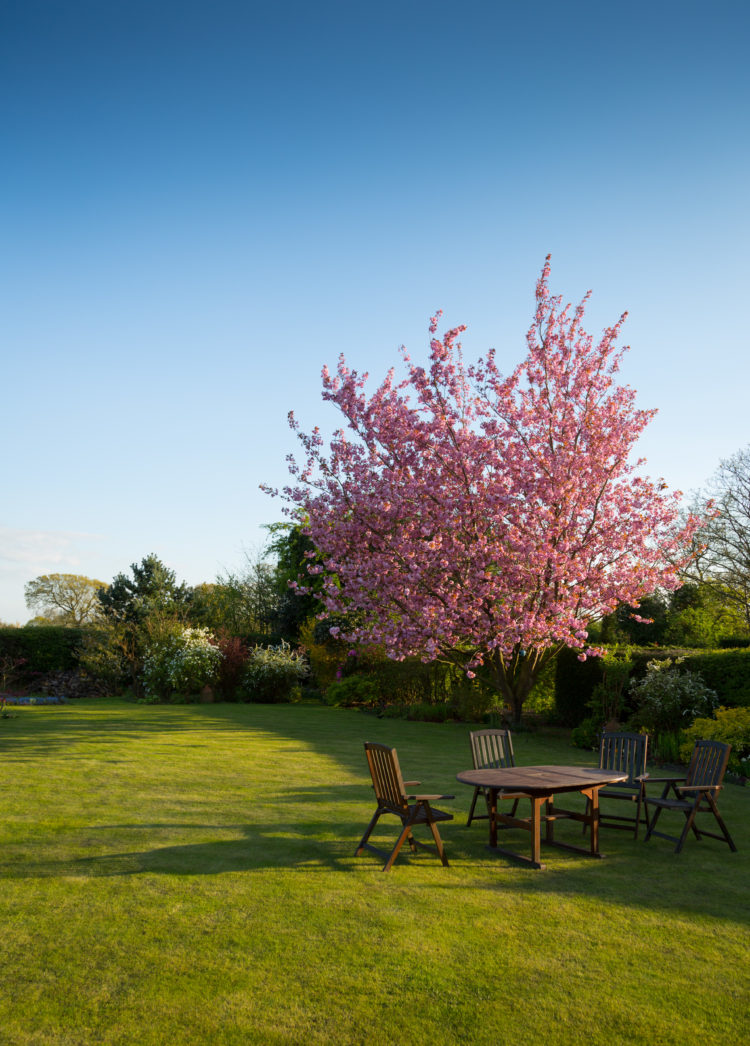 Amazing spring garden with what looks like a cherry blossom